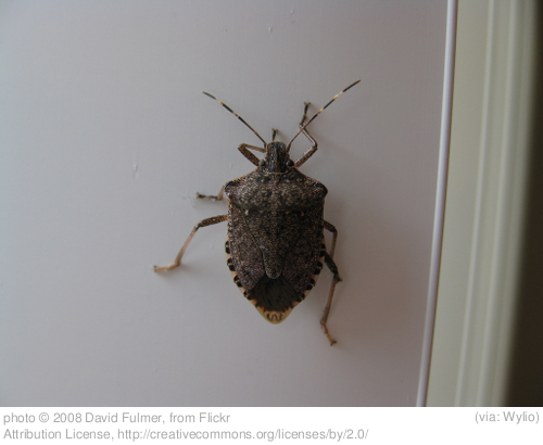 News Bulletin Regarding the Recent Stink Bug Attack in South America