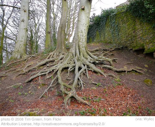 The Scary Thing About Family Trees (and Their Roots)