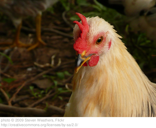 Five Writing Lessons I Learned From Butchering Chickens